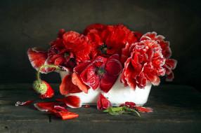 цветы, маки, букет, красные