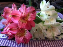 цветы, альстромерия, белая, розовая