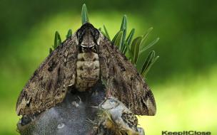 бабочка, пень
