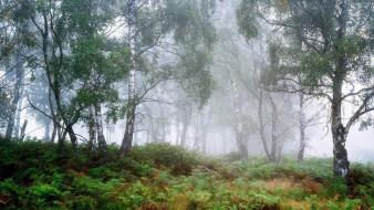 peak district, derbyshire, england, природа, лес, peak, district