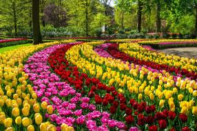 клумбы, парк, цветы