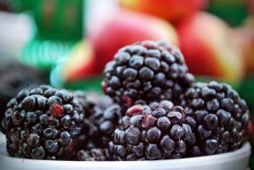 ягоды, ежевика, спелая