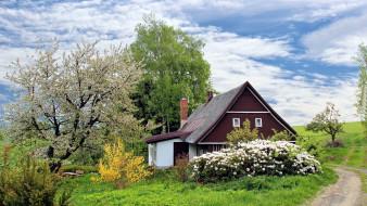 города, - здания,  дома, дом, весна, цветущие, кусты
