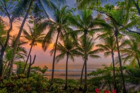 . обои для рабочего стола 2119x1415 красота да ляпота, природа, пейзажи, закат, цветы, пальмы, вечер, карибы, коста-рика