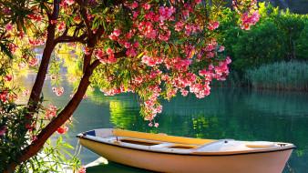корабли, лодки,  шлюпки, река, лодка, цветущее, дерево