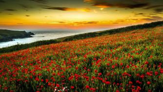 обои для рабочего стола 2048x1168 природа, луга, лето, луг, трава, цветы, маки