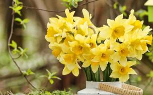 цветы, нарциссы, букет, желтые
