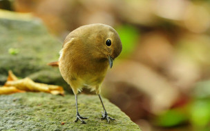 животные, птицы, птица, камни