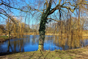 природа, реки, озера, река, деревья, весна