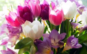 цветы, разные вместе, тюльпаны, фрезии