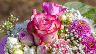 цветы, разные вместе, розы, георгины, гипсофила