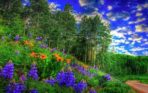 природа, луга, лето, луг, трава, цветы