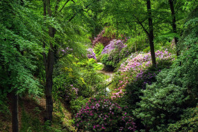 природа, парк, весна, цветение