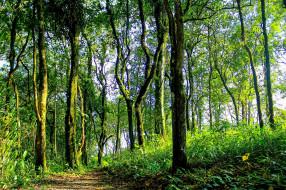 thailand, природа, лес