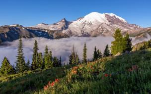 mount rainier national park, pearce county, usa, природа, горы, mount, rainier, national, park, pearce, county