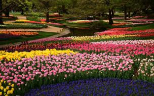 природа, парк, весна, водоем, клумбы, цветы, тюльпаны