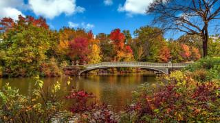 природа, парк, осень, река, мост
