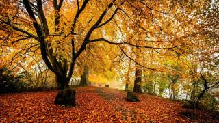 природа, парк, осень, листопад