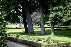 природа, парк, деревья