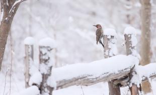 животные, птицы, снег, птица, зима, на, открытом, воздухе