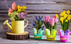 цветы, разные вместе, крокусы, гиацинты, мускари, нарциссы
