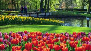 keukenhof flower park, netherlands, природа, парк, keukenhof, flower, park