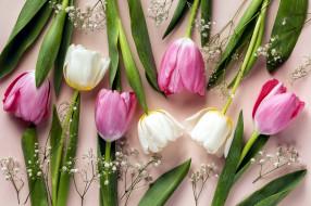 цветы, тюльпаны, разноцветные, бутоны