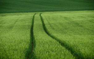 природа, поля, поле, лето