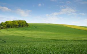 природа, поля, деревья, лето