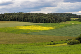 природа, поля, лес, лето