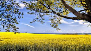 природа, поля, лето, поле, рапс