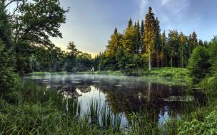 природа, реки, озера, пруд, рассвет, туман