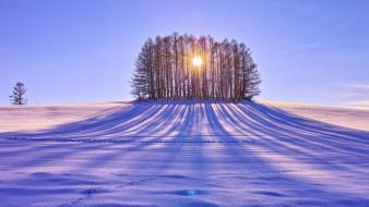 природа, зима, снег, тень, деревья, солнце, поле