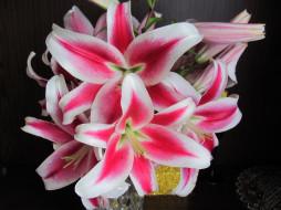 цветы, лилии,  лилейники, бело-розовые, макро
