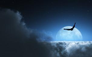 разное, компьютерный дизайн, облака, луна, птица