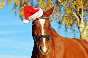 животные, лошади, конь, рыжий, шапка, дерево