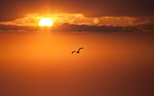 животные, чайки,  бакланы,  крачки, чайка, закат, море, солнце, облака