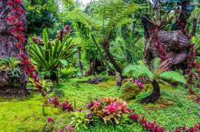 thailand, природа, парк