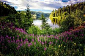 природа, реки, озера, гора, лес, река, кипрей