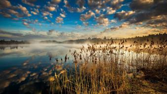 природа, реки, озера, озеро, туман, камыши