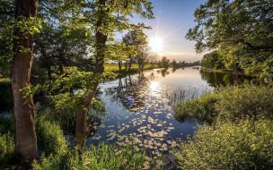 природа, реки, озера, река, деревья, закат