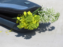 цветы, разные вместе, букетик