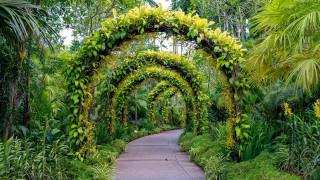 природа, парк, аллея, арки, растения