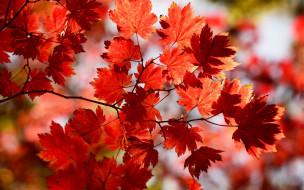 природа, листья, ветка, осень