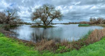 природа, реки, озера, островок, дерево, река, трава