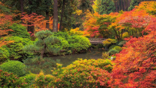 portland japanese garden, природа, парк, portland, japanese, garden