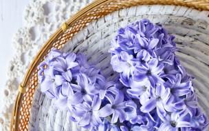 цветы, гиацинты, корзинка, макро