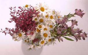 цветы, букеты,  композиции, букет, альстромерия, ромашки