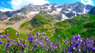 природа, горы, снег, панорама, цветы