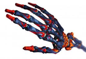 фэнтези, роботы,  киборги,  механизмы, рука, кисть, скелет, робот